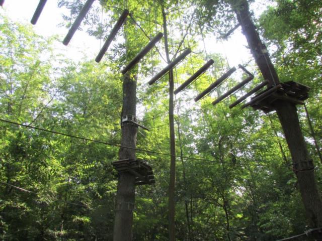Tree Experience – Rescaldina